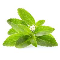 Wilde-Karde mit frischen Stevia Blättern 50/100 ml, Bio