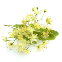 Lindenblüte Tinktur 50ml, Bio